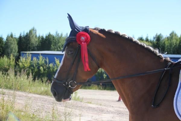 Biggis fest och tävling hallsta 2015 249